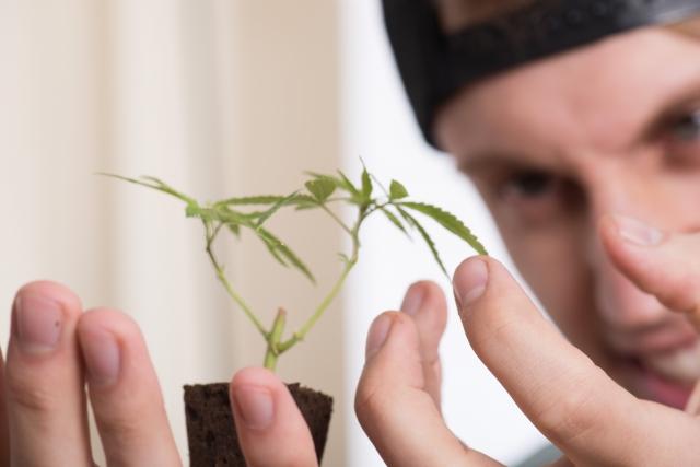 大麻の所持で不起訴にできる?大麻事件に強い弁護士が徹底解説